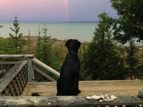 Bring your dog!-1 (2016_02_05 19_04_42 UTC)